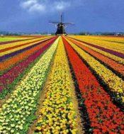 Hollandse Likeuren