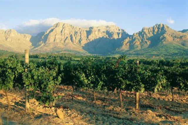 Vin de France, Roussillon